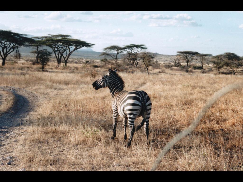 Safarivo, pour un séjour vraiment réussi